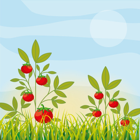 agriculture plantation vegetable tomatoes image vector illustration Ilustração