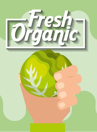 hand holding vegetable fresh organic lettuce vector illustration