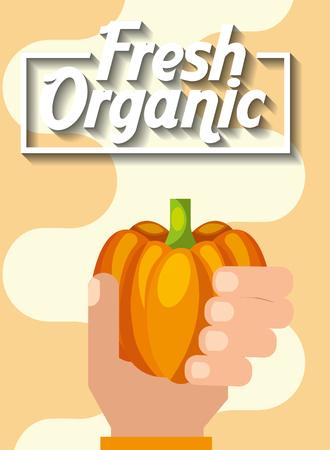 agriculture plantation vegetable pumpkin image vector illustration