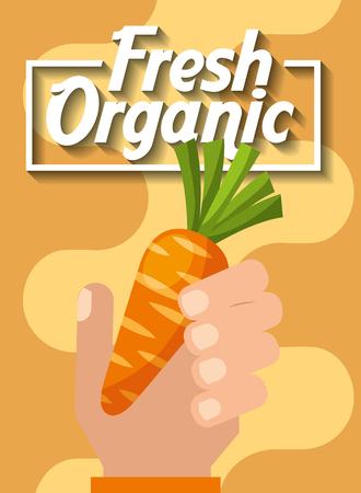 hand holding vegetable fresh organic carrot vector illustration Illustration