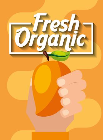 hand holding fresh organic fruit mango vector illustration
