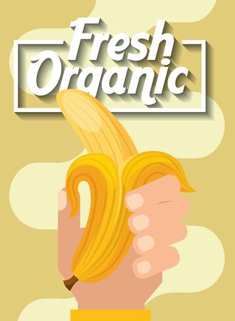 hand holding fresh organic fruit banana vector illustration Çizim