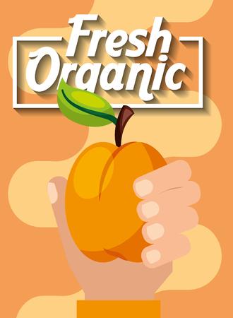 hand holding fresh organic fruit peach vector illustration Stock Vector - 101819813