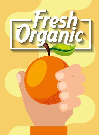 hand holding fresh organic fruit orange vector illustration Illustration