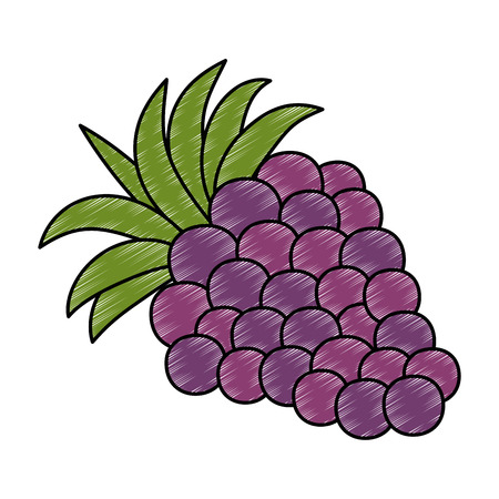 fresh grapes fruits icon vector illustration design Imagens - 101879039