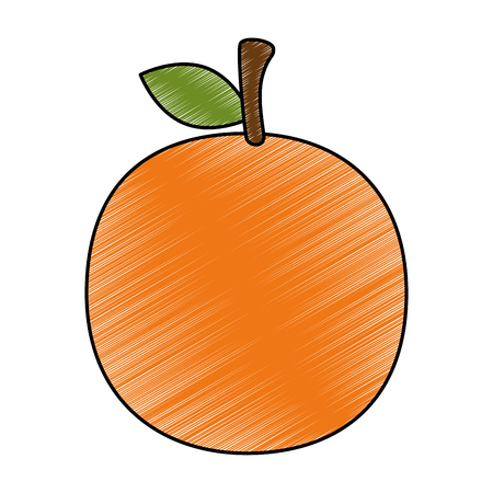 fresh orange fruit icon vector illustration design