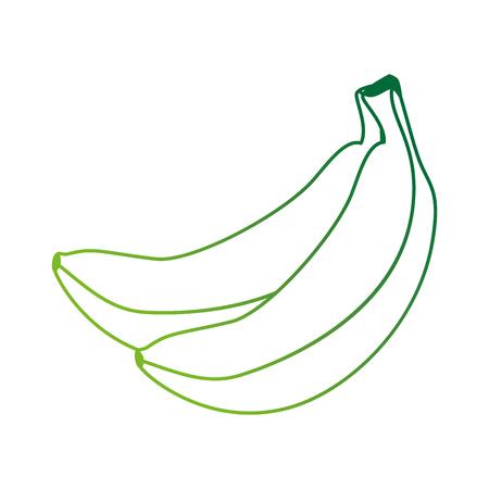 fresh bananas cluster fruit icon vector illustration design