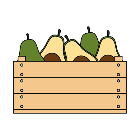 fresh avocados in wooden box vegetarian food vector illustration design  イラスト・ベクター素材