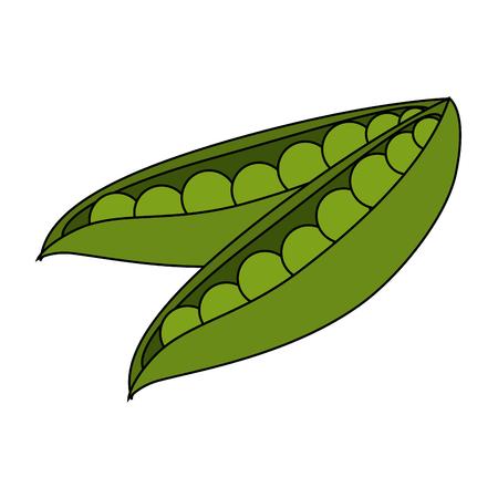 fresh beans vegetarian food vector illustration design