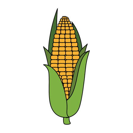 fresh corn vegetarian food vector illustration design Illustration