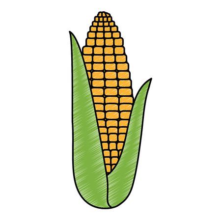 fresh corn vegetarian food vector illustration design Illustration