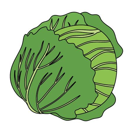 fresh cabbage vegetarian food vector illustration design