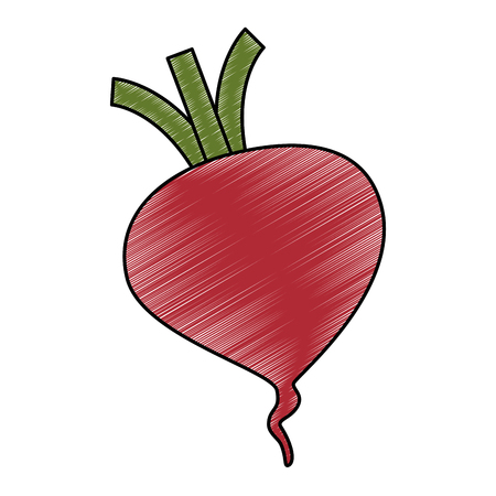 fresh beet vegetarian food vector illustration design