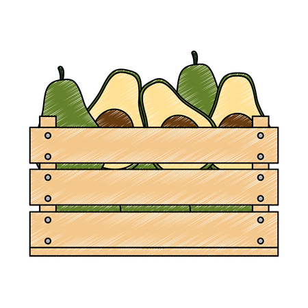 fresh avocados in wooden box vegetarian food vector illustration design Illustration