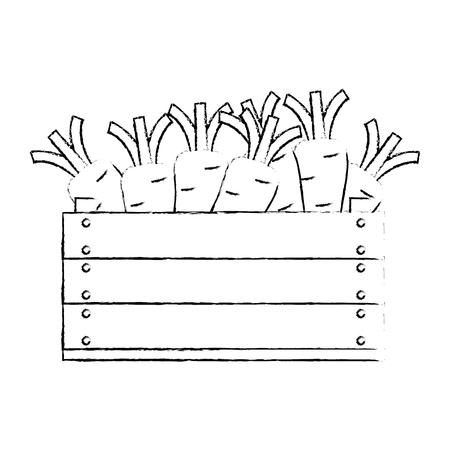 fresh carrots in wooden box vegetarian food vector illustration design