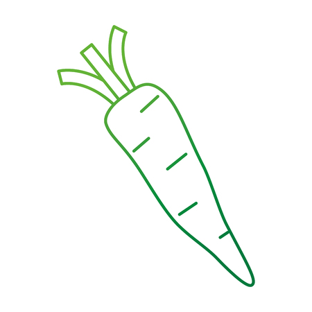 fresh carrot vegetarian food vector illustration design