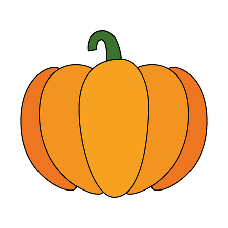fresh pumpkin vegetarian food vector illustration design