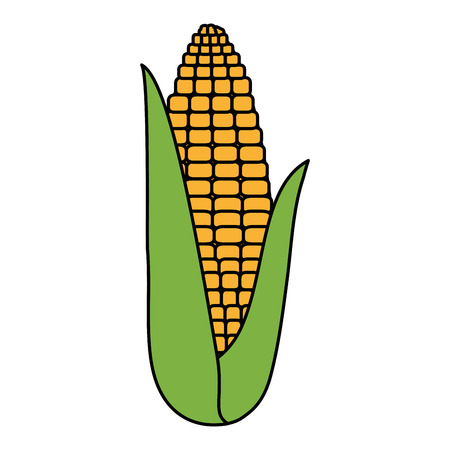 fresh corn vegetarian food vector illustration design  イラスト・ベクター素材