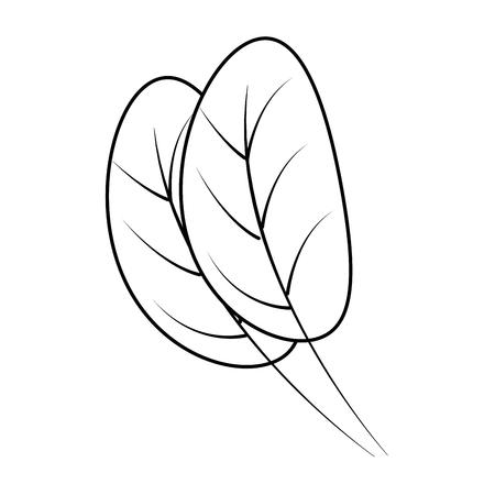 kitchen leafs ingredients healthy food vector illustration design 일러스트