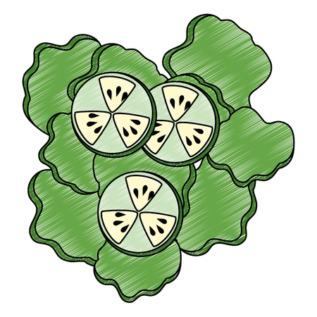 salad of cucumber and lettuce vector illustration design Ilustrace