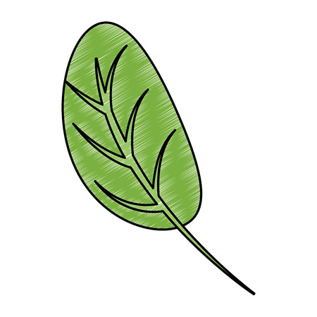 kitchen leafs ingredients healthy food vector illustration design  イラスト・ベクター素材