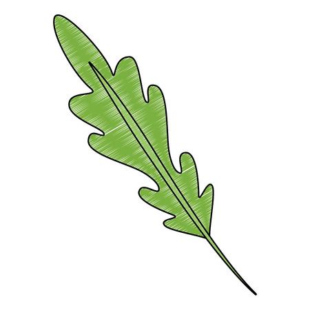 fresh coriander healthy food vector illustration design Illustration