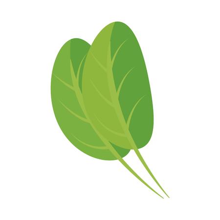 kitchen leafs ingredients healthy food vector illustration design Illustration