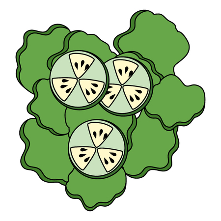 salad of cucumber and lettuce vector illustration design Ilustração