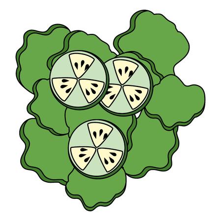 salad of cucumber and lettuce vector illustration design Illustration