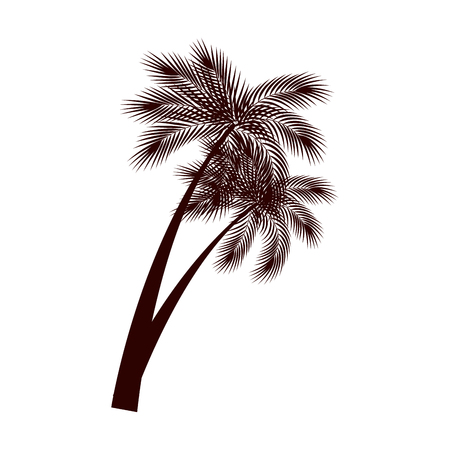 trees palms natural icon vector illustration design