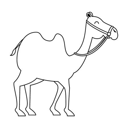 Transporte de animales en camello árabe, diseño de ilustraciones vectoriales