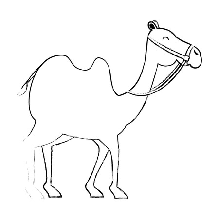 camel animal transport arabe vector illustration design Stock Photo