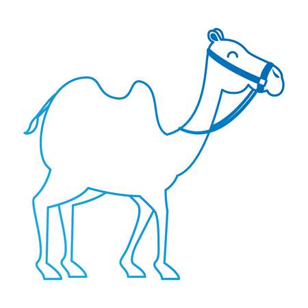 camel animal transport arabe vector illustration design Illusztráció
