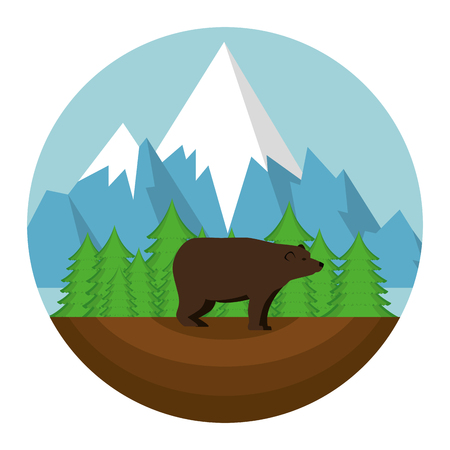 bear grizzly canadian seal vector illustration design Illustration