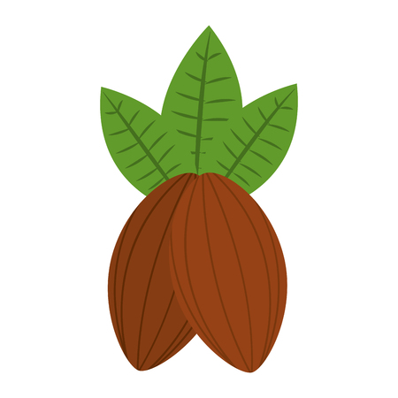 cocoa beans leaves fruit image vector illustration Ilustrace