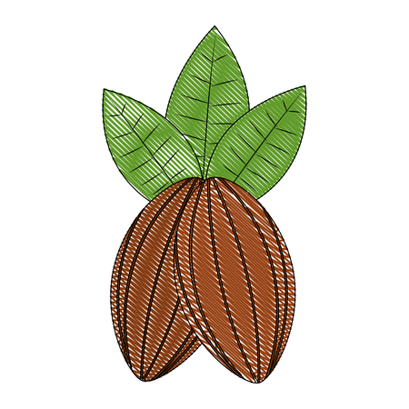 cocoa beans leaves fruit image vector illustration drawing Stock Illustratie