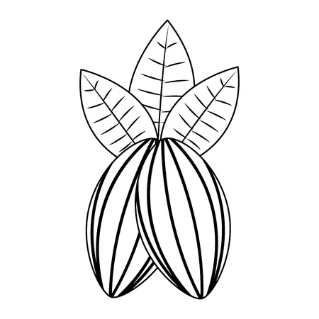 cocoa beans leaves fruit image vector illustration black and white black and white