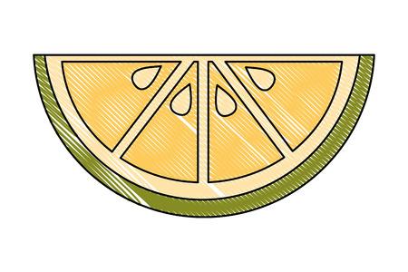 slice lemon citurs fresh image vector illustration drawing
