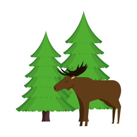 Canadian elk wild with pines forest vector illustration design