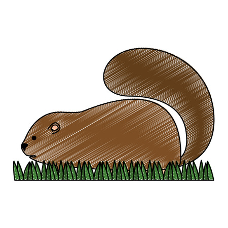 cute canadian marmot icon vector illustration design