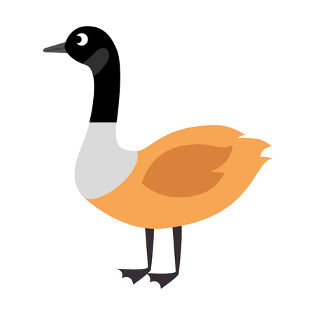 wild canadian duck icon vector illustration design