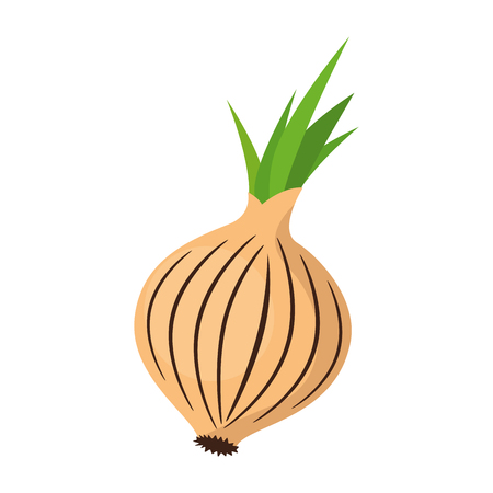 fresh onion vegetarian food vector illustration design