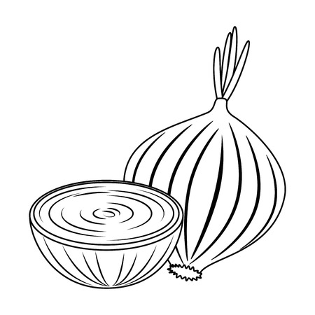 fresh onion vegetarian food vector illustration design Reklamní fotografie - 102905246