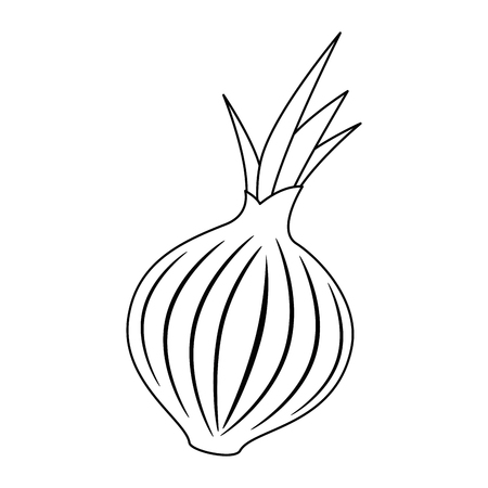 fresh onion vegetarian food vector illustration design Banco de Imagens - 102905262