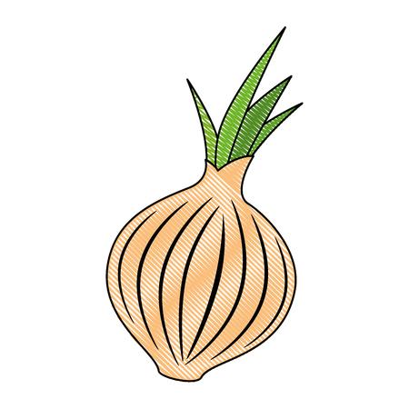 fresh onion vegetarian food vector illustration design
