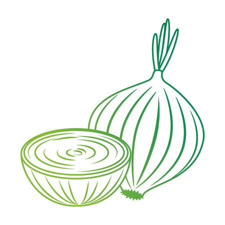 fresh onion vegetarian food vector illustration design 写真素材 - 102905460