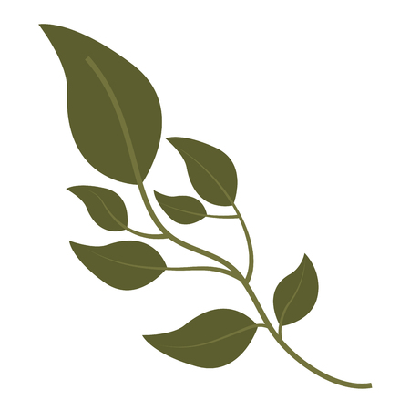 olive branch natural botanical image vector illustration Illustration