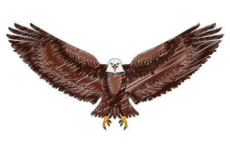 american eagle open wings bird vector illustration drawing