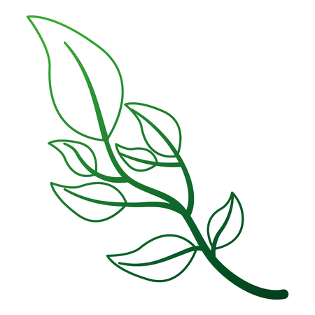 olive branch natural botanical image vector illustration  イラスト・ベクター素材