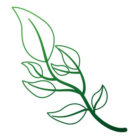 olive branch natural botanical image vector illustration Illustration